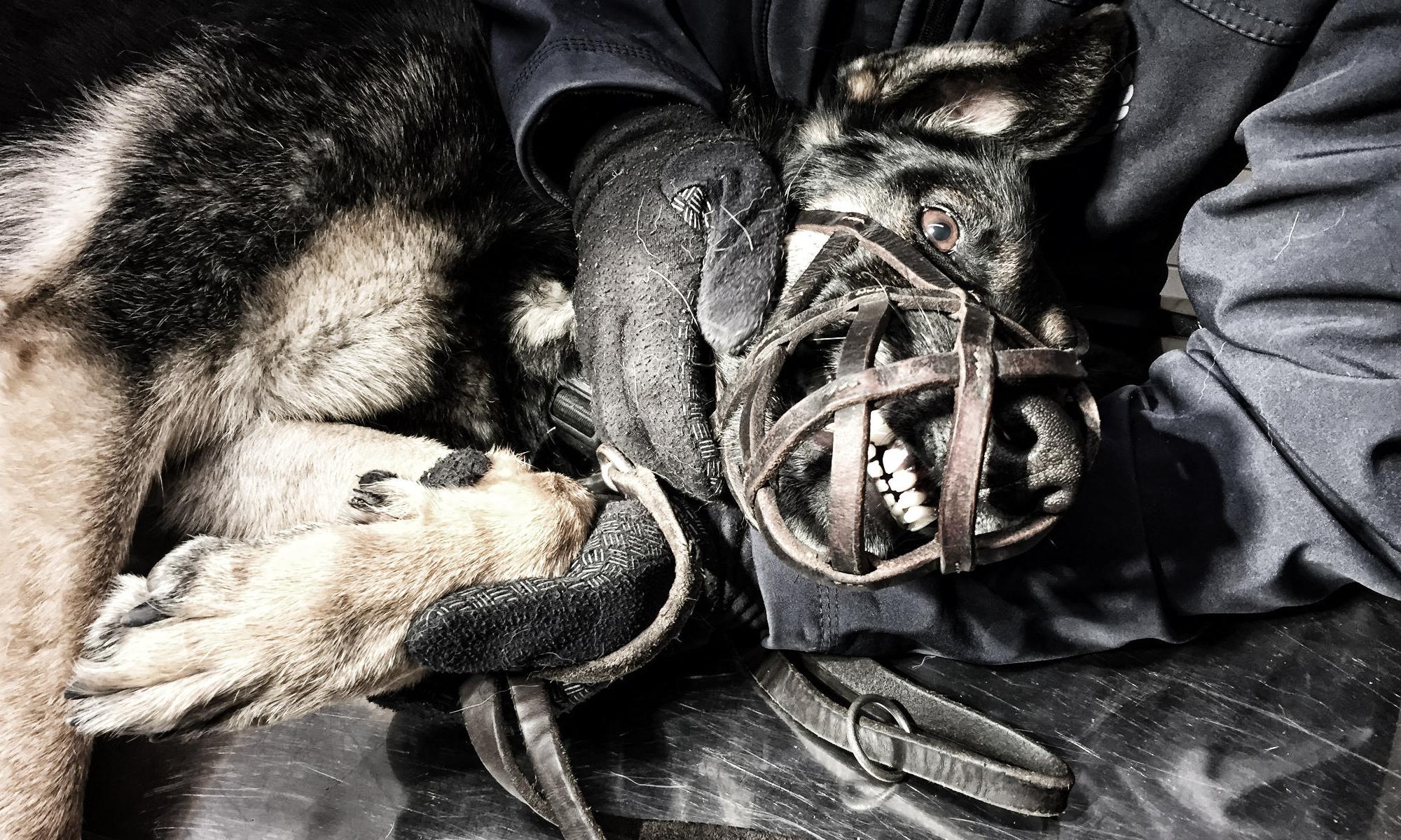 Bündnis Schattenhund
